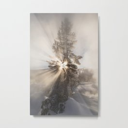 Winter Tree - Yellowstone Metal Print