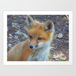 Fox 2018-1 Art Print