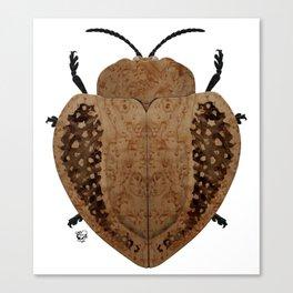 Exotic Wood Tortoise Beetle Canvas Print