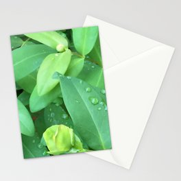 Kubota Garden green plant leaves with water drops Stationery Cards