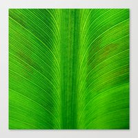 banana leaf Canvas Prints featuring Banana Leaf by moo2me