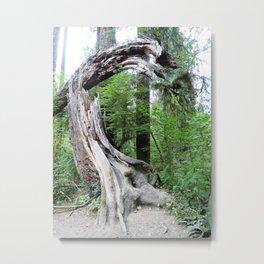 Hoh Rain Forest 1 Metal Print