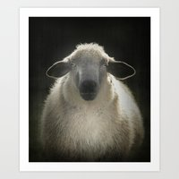 sheep Art Prints featuring Sheep by Monika Strigel
