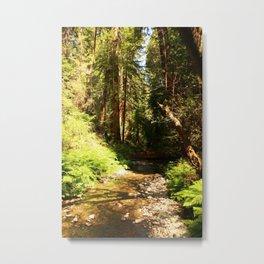 A Muir Woods Scene Metal Print
