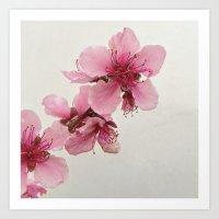 Spring Blossom 2 Art Print