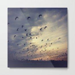 Birds Over the Back Bay Metal Print