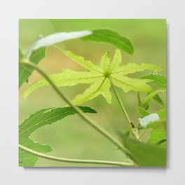 Artistic Leaf Metal Print