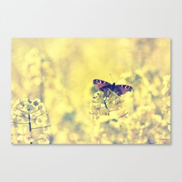 Sunshine and Butterflies Canvas Print