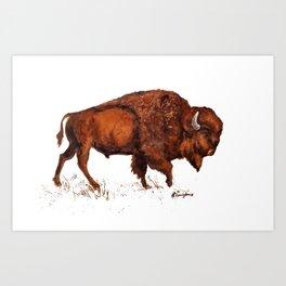Buffalo Bison Watercolor Print Art Print
