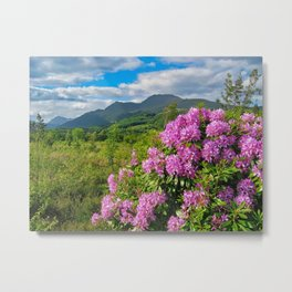Rhododendrons on West Highland Way Metal Print