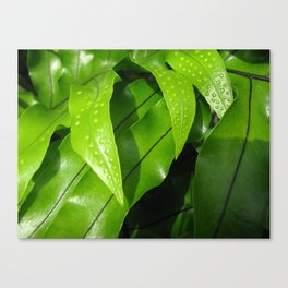 From the Conservatory #42 Canvas Print