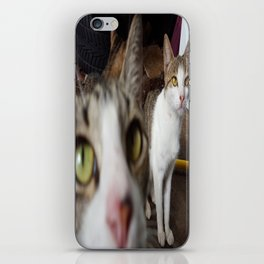 Back Yard Kitties  iPhone Skin