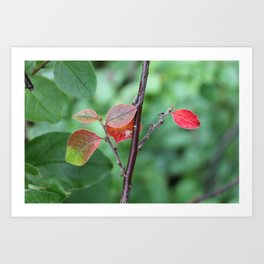 Small Red Leaves Art Print