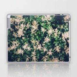 Astilbe From Above Laptop & iPad Skin