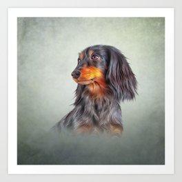 Drawing Dog breed long haired dachshund Art Print