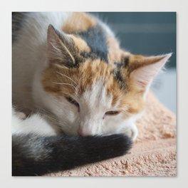 dozing tri-colored calico cat Canvas Print