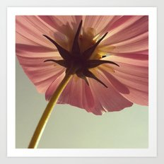 FLOWER 008 Art Print