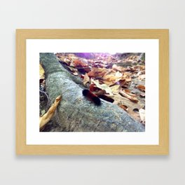 WOOLY BEAR CATERPILLAR (Crescent Trail, Fairport, NY Framed Art Print