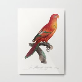 The Crimson Shining Parrot Prosopeia splendens from Natural History of Parrots (1801-1805) by Franco Metal Print