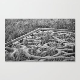 An Ant's Labyrinth Canvas Print