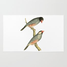 Paddy bird, Rice bird, or Java Sparrow Bird Illustration by William Swainson Rug