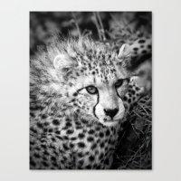cheetah Canvas Prints featuring Cheetah by Mark Nelson