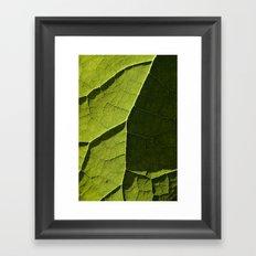 Leaf Veins I Framed Art Print