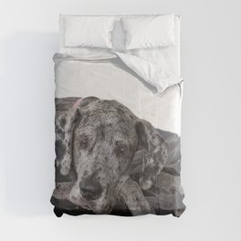 Great Dane waiting Comforters