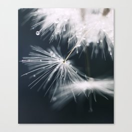 dandelion white Canvas Print