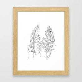 Minimal Line Art Fern Leaves Framed Art Print