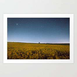 Starry Skies Over Canola Art Print