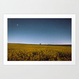 Starry Skies Over Canola Art Print