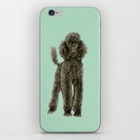 poodle iPhone & iPod Skins featuring Poodle by Katherine Coulton