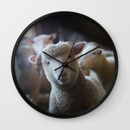 Sheep Looking at Camera Wall Clock