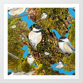 Black Cap Chickadee on Moss Art Print