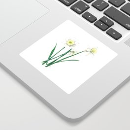 White Daffodils - 'Ice Follies' Botanical Illustration Sticker