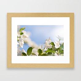 Flowering Cerasus cherry tree Framed Art Print