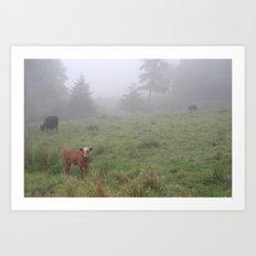 Vermont cattle Art Print