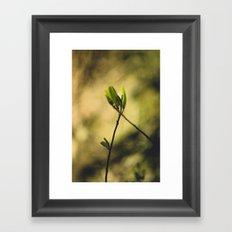 Spring at Nesmith Point Framed Art Print