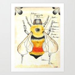 Bombus rufocinctus Art Print