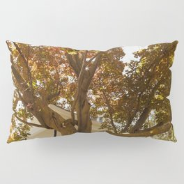 LOOKING UP COLOR Pillow Sham