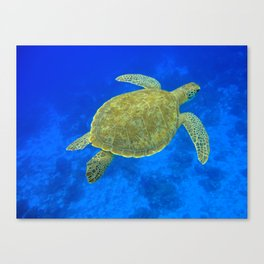 Wildlife: Green Turtle III Canvas Print