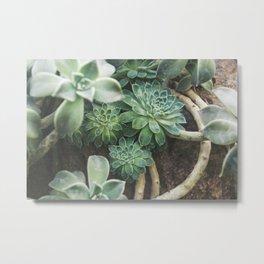 Botanical Gardens Succulent #625 Metal Print