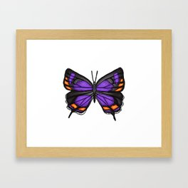 Colorado Hairstreak Butterfly No. 2 Framed Art Print