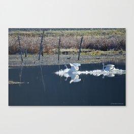 Swans Landing I Canvas Print