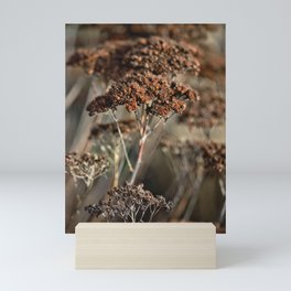 seed pods   Nature photography   brown Mini Art Print