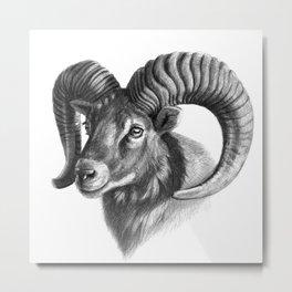The mouflon G125 Metal Print