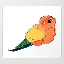 Sleepy Sun Conure Art Print