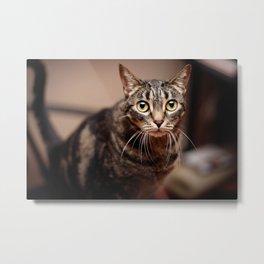 Cat's Big Eyes Metal Print