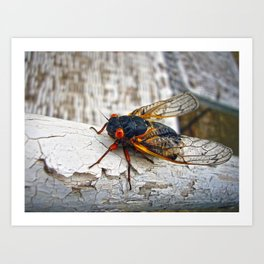 Red Eyed Cicada Art Print